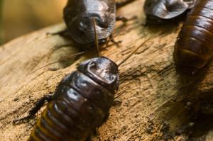 cockroaches-1